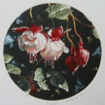 "Fuchsia, edition of 50, 5 7/8'' diameter $225.00, 11.25 "" sq. framed $295.00"