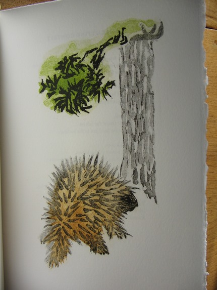 Cecil Day In Tandem images porcupine